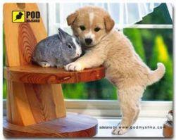 Коврик для мыши Podmyshku Щеночек